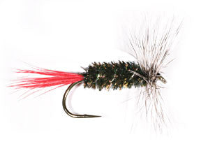 Grey Hackle Peacock - Dry Fly