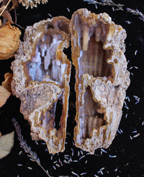 Agatized Coral Fossil Pair-GratefulGemHead