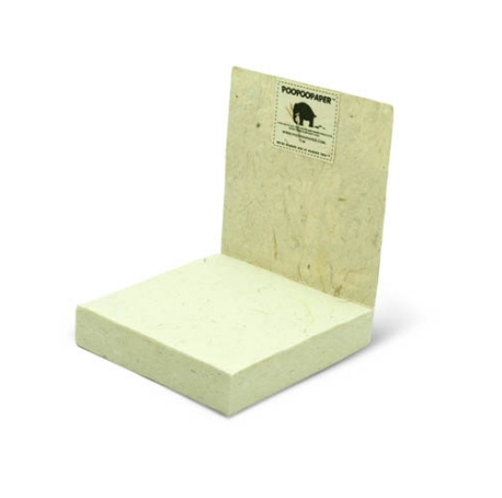 Scratch Pad - Sea Turtle Grass