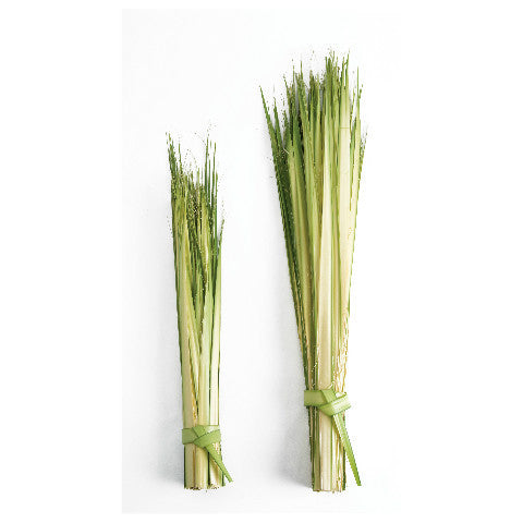 Short Individual Palm Strips for Palm Sunday