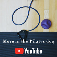Morgan the Pilates dog