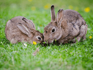 California leads the way in banning cosmetic animal testing