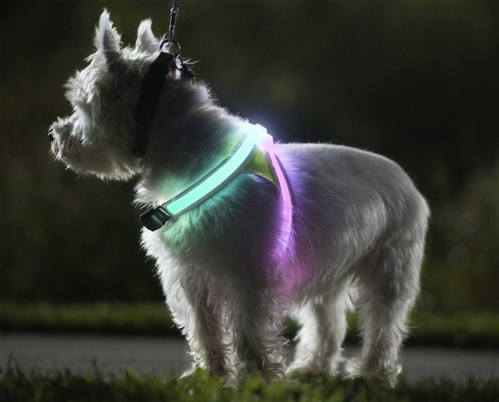 Noxgear Lighthound Visibility Vest