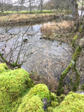Verbeia River Essence - Kettlewell