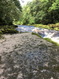 Verbeia River Essence - The Strid