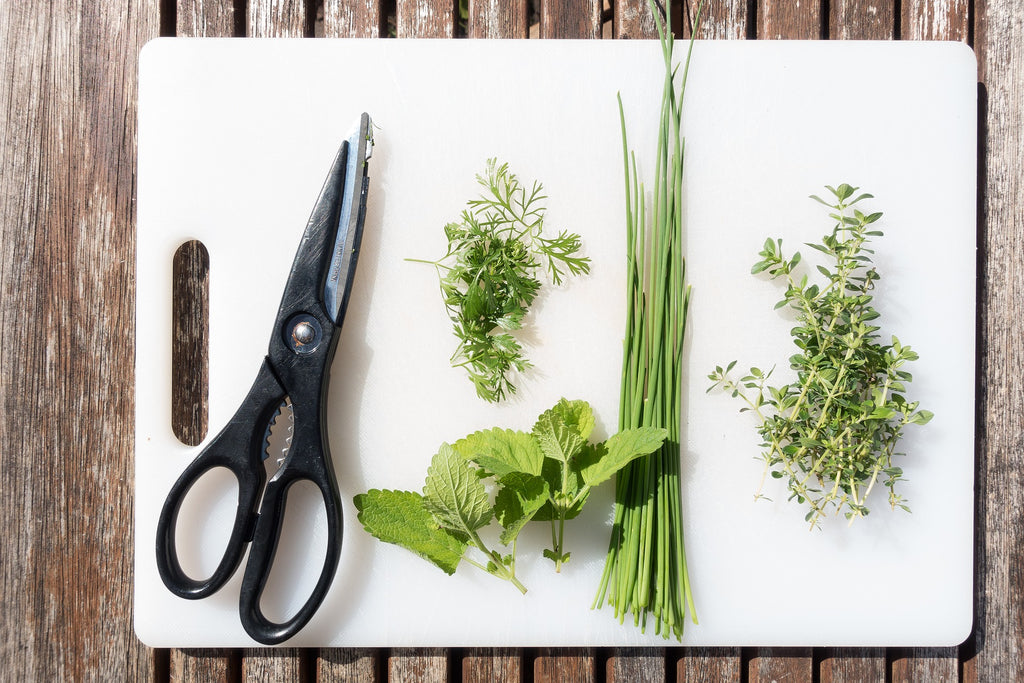 Kitchen knives: Kitchen shears and herbs on a cutting board