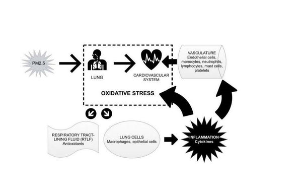 Air Pollution and Oxidative Stress
