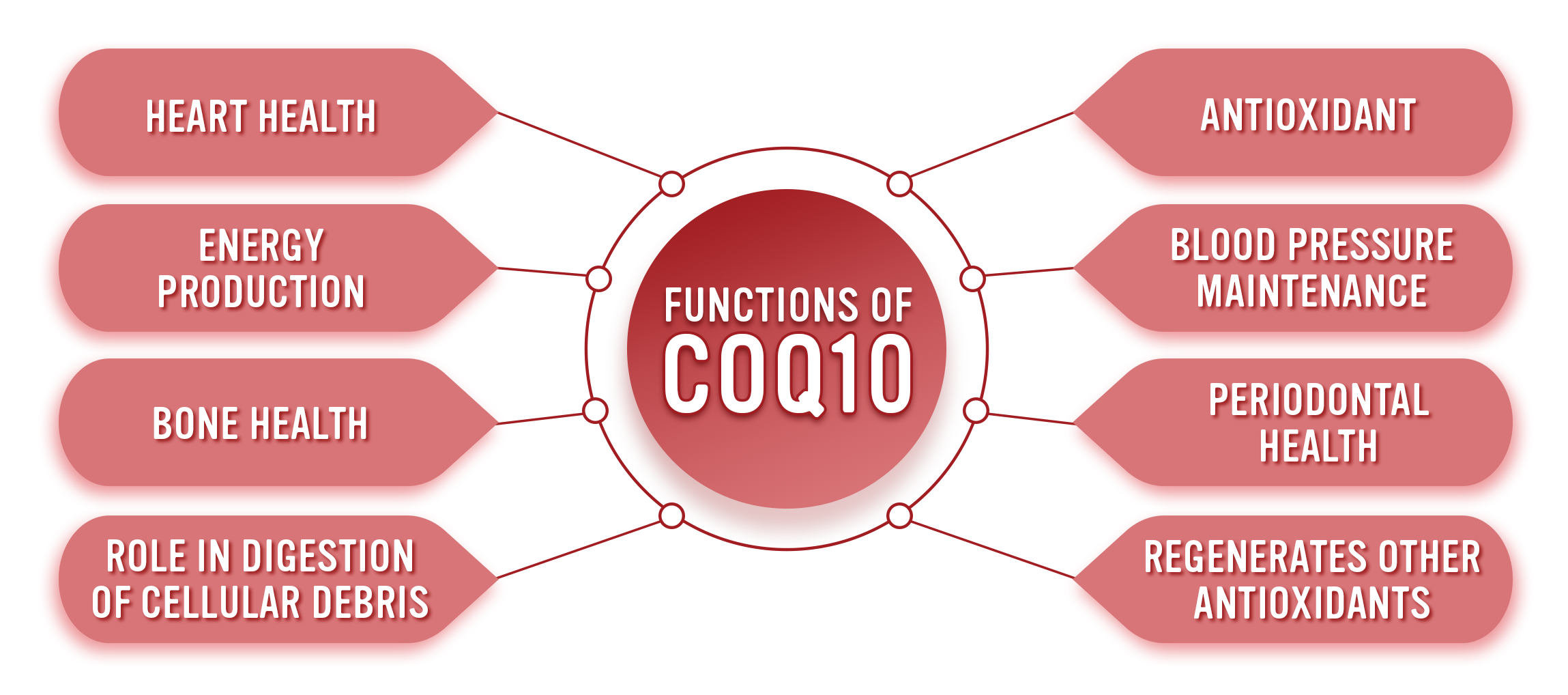 Functions of CoEnzyme Q10