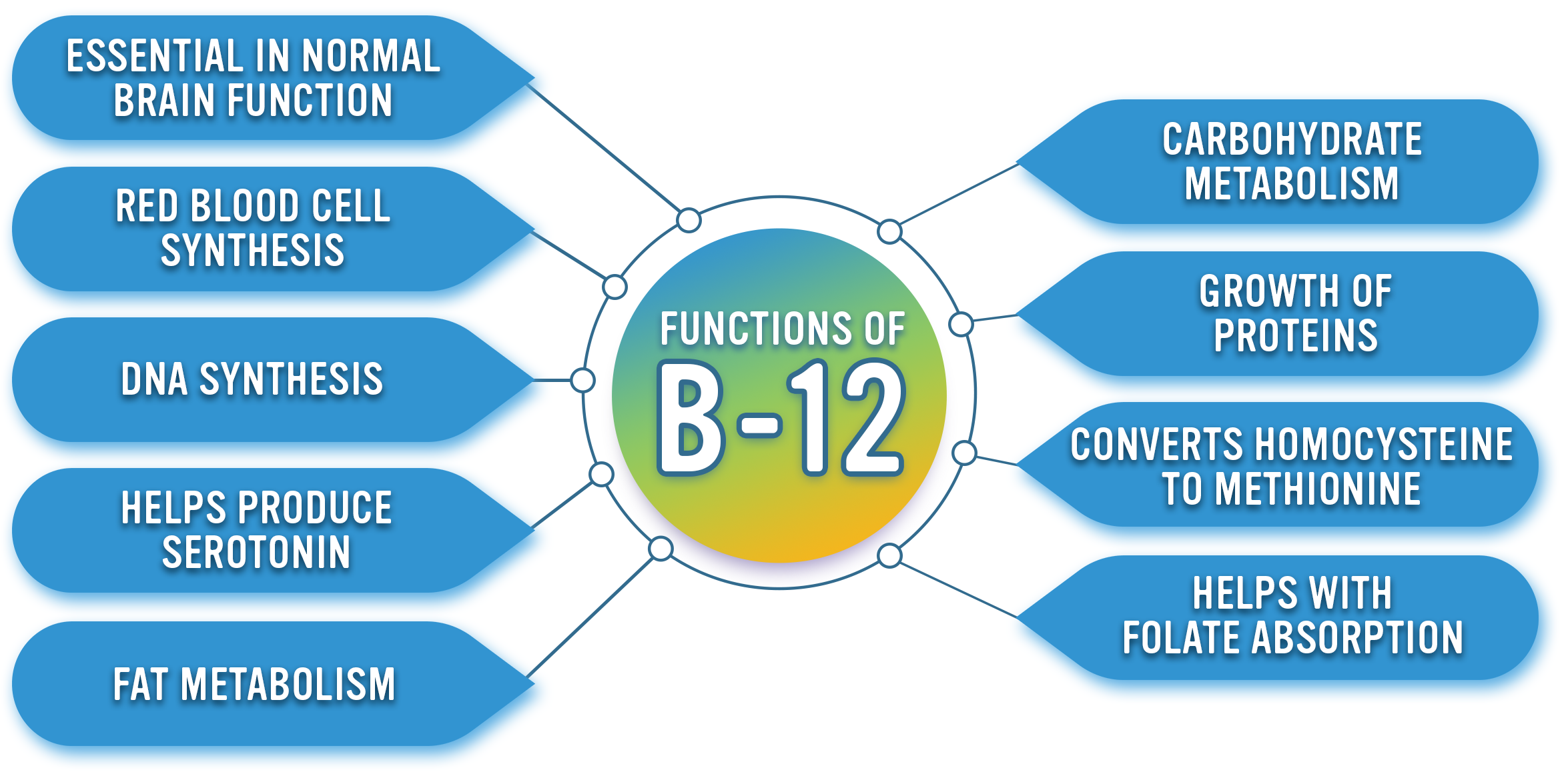Functions of Vitamin B-12