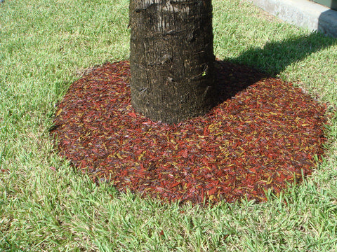 Image of rubber mulch tree ring around tree stump