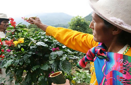 Peru Coffee Steps into the Limelight