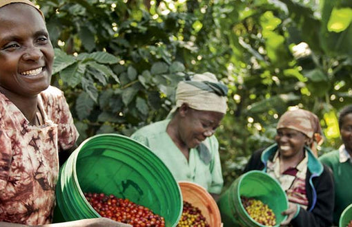 Black Friday Starts Today - Buy Aged Tanzania Coffee - Half Price