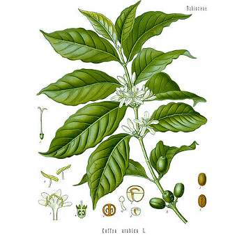 Drawing of the COFFEA Tree