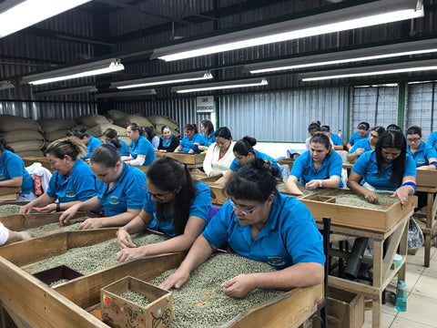 Costa Rica Coffee Farmers Sorting Green Coffee Beans