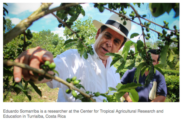 Eduardo Somarriba is a researcher at the Center for Tropical Agricultural Research and Education in Turrialba, Costa Rica