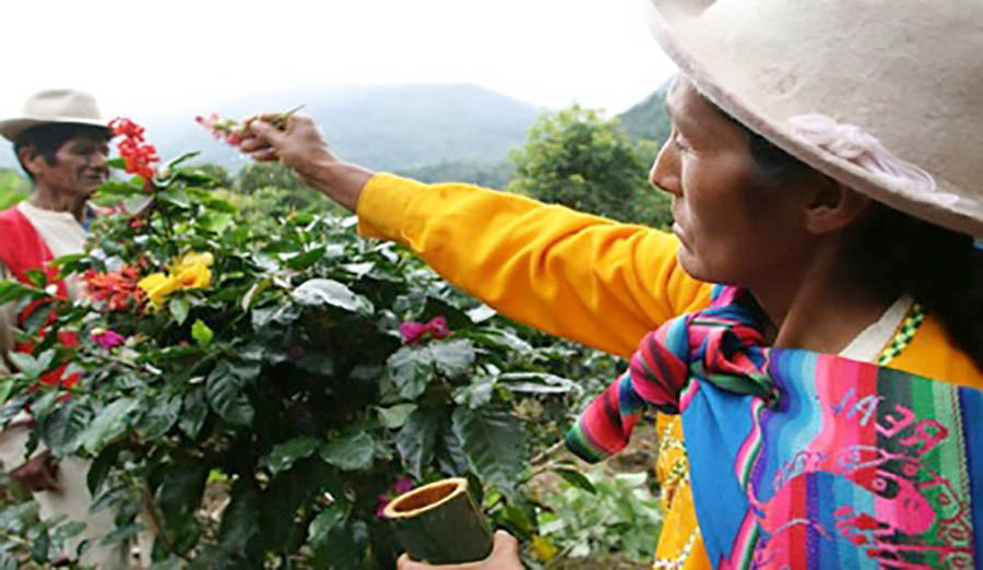 Peru Coffee Farmers