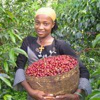 Woman coffee farmer with basket of coffee cherries from Ethiopian Coffee Farm