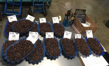 Decaf Coffees on the Coffee Cupping Table