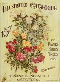 Iron Orchid Designs - Full Color Transfers  NEW!