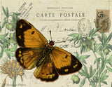 Monahan Papers - Antique Papers, French Botanicals