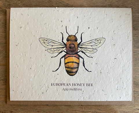 European Honey Bee - Seed Card