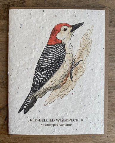 Woodpecker - Seed Card