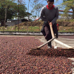 Dominican Republic - Sprit Mountain (Bulk) - Crowded House Coffee
