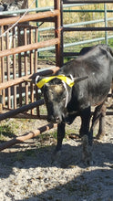 Horn Wraps for Steers