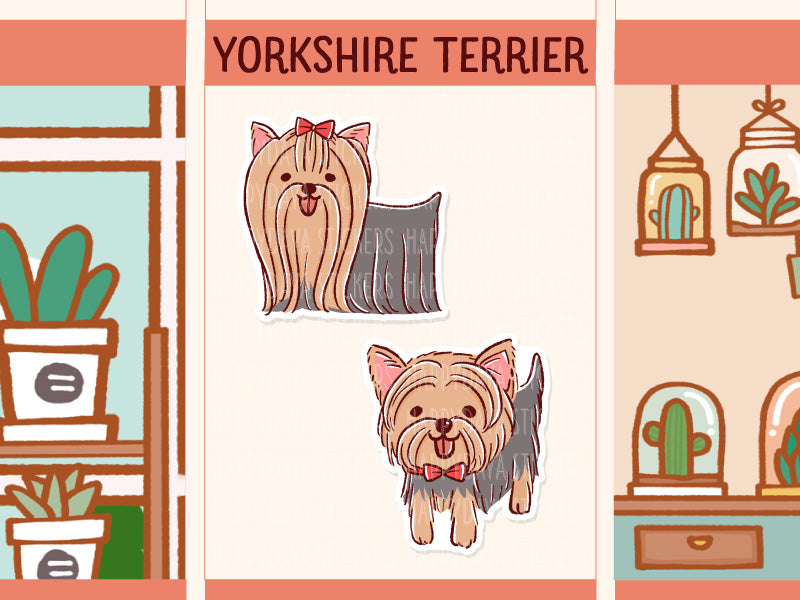 FI102: Yorkshire terrier