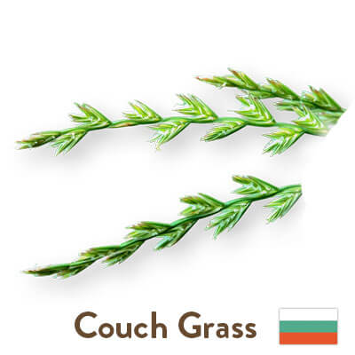 couch grass sourced from Bulgaria