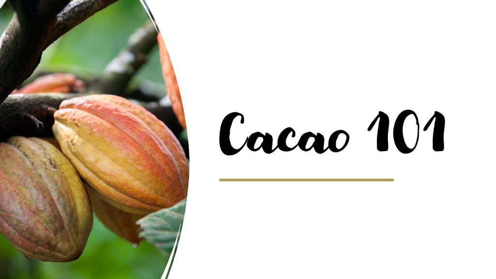 Global Cacao Conference: Cacao 101 Recording