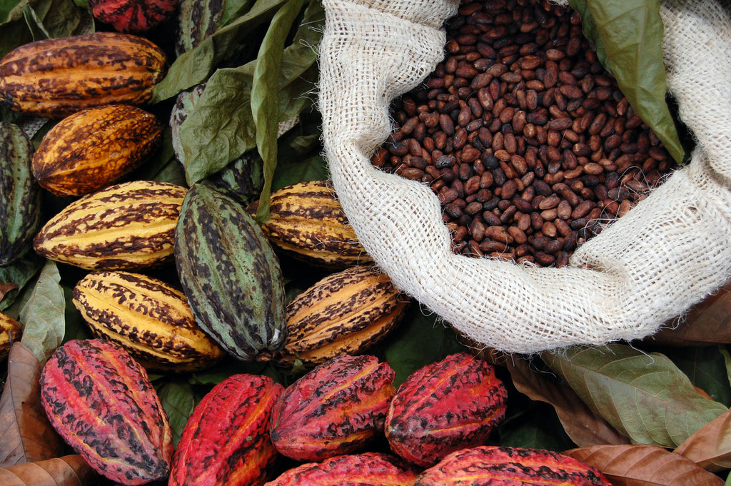 Cacao Varieties – Not a simple question!