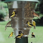 Squirrel-Free Bird Feeders