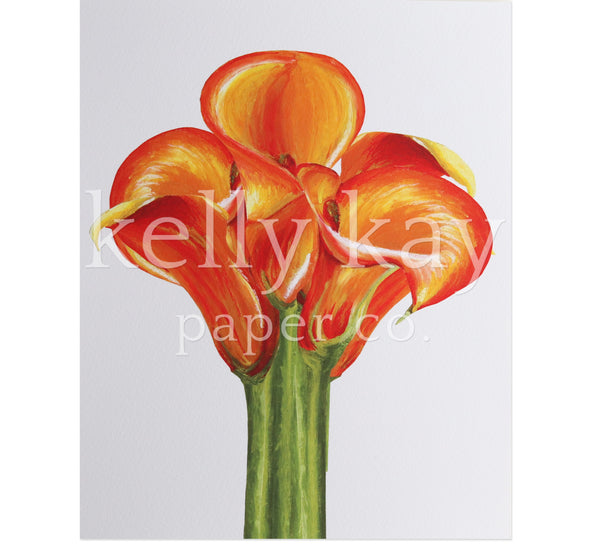 Art Print | Flame Calla Lily