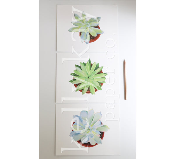 Art Print | Succulent Set/3