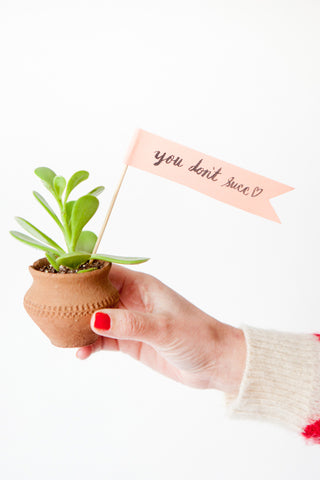You don't succ gift for valentines day potted succulent