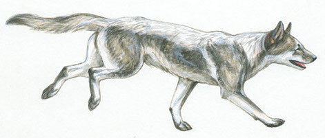 Ten Now-Extinct Dog Breeds