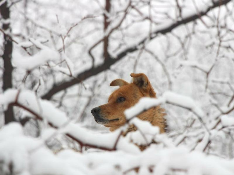 5 Ways To Keep Your Dog Happy In Winter