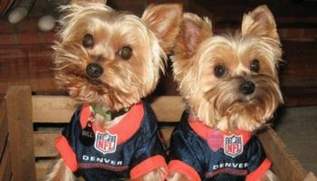 34e0f732b We have a huge selection of NFL jersey's and gear for your dog and all the NFL  officially licensed football jerseys. Dress your dog up for your favorite  ...