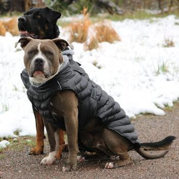 Alpine Extreme Weather Puffer Dog Coat by Doggie Design - Black-Doggie Design-High Society Canine
