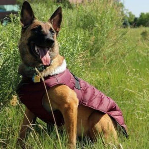 Alpine Extreme Weather Puffer Dog Coat by Doggie Design - Burgundy-Doggie Design-High Society Canine