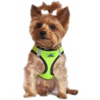 American River Top Stitch Dog Harness - Iridescent Green