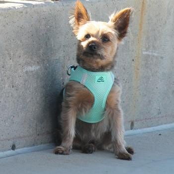 American River Ultra Choke-Free Mesh Dog Harness by Doggie Design - Teal