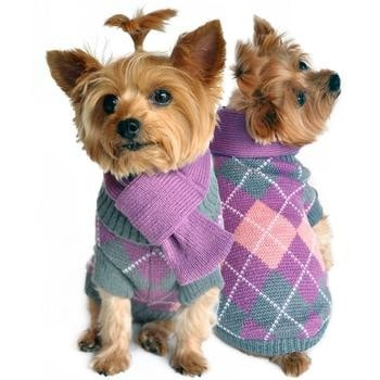 Clearance - Argyle Purple Dog Sweater with Scarf
