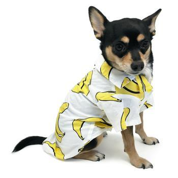 Banana Collared Dog Shirt by Dogo-DOGO-High Society Canine