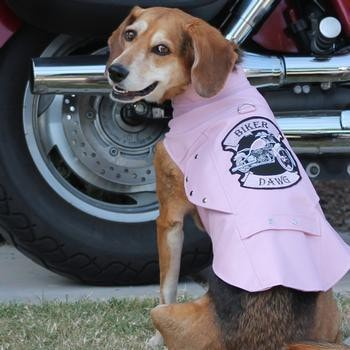 Biker Dawg Motorcycle Dog Jacket by Doggie Design - Pink-Doggie Design-High Society Canine