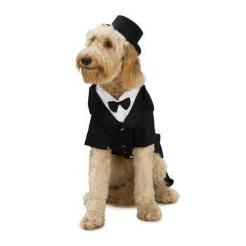 Dapper Dog Halloween Costume-Rubies Costumes-High Society Canine