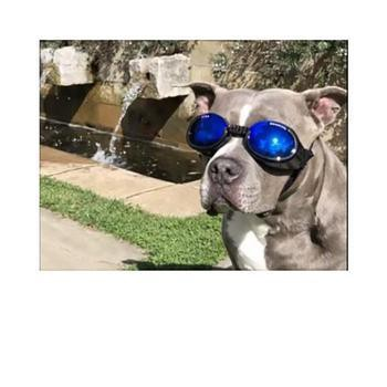 Doggles - ILS2 Shiny Black Frame with Mirror Blue Lens-Doggles-High Society Canine