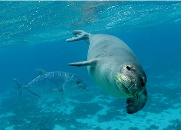 Support the expansion of the Papahānaumokuākea Marine National Monument