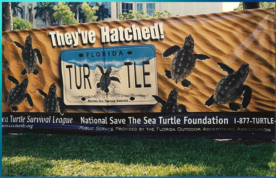 Adopt a Sea Turtle Nest  - Save the Sea Turtle Foundation